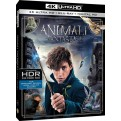 ANIMALI FANTASTICI E DOVE TROVARLI (4K UHD + Blu-Ray + Copia Digitale)